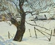 Thumbnail of Artwork by Robert Lougheed,  Old Tree in Snow