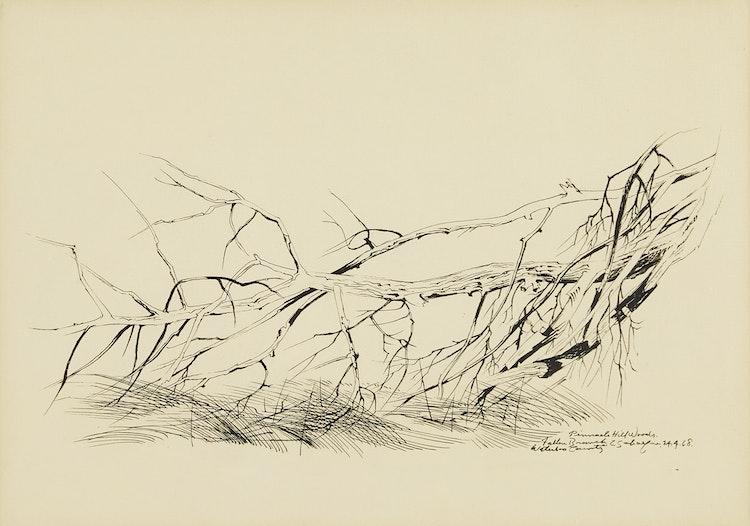 Artwork by Carl Fellman Schaefer,  Fallen Branch, Pinnacle Hill Woods