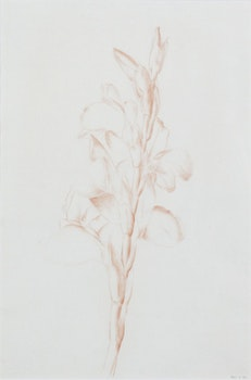Artwork by Lionel LeMoine FitzGerald, Red Conte Floral