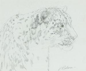 Artwork by Robert Bateman, Study for High Kingdom Snow Leopard