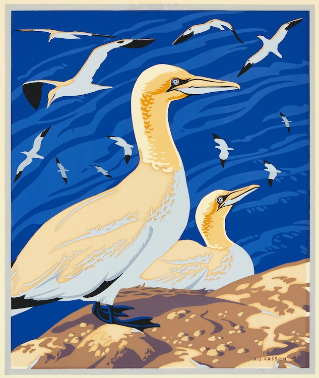 Artwork by Alfred Joseph Casson,  The Solan Goose or Gannet