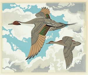 Artwork by Alfred Joseph Casson, Pintail