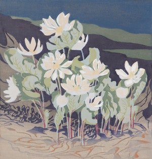Artwork by Mary Evelyn Wrinch, Northern Bloodroot