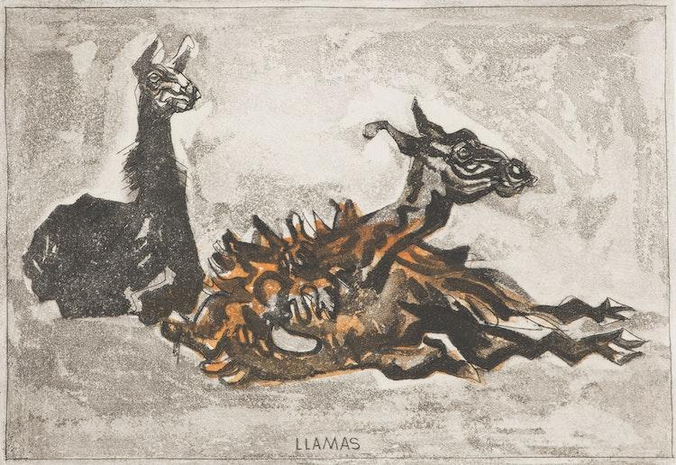 Artwork by Alistair Macready Bell,  Llamas