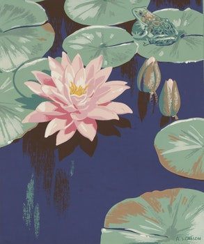 Artwork by Alfred Joseph Casson, Pink Lily and Frog