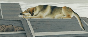 Artwork by David Alexander Colville, Chien D'Or