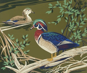 Artwork by Alfred Joseph Casson, Wood Duck