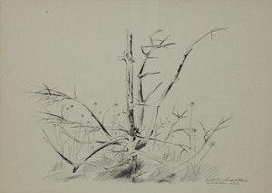 Artwork by Carl Fellman Schaefer, Small Pine Stump