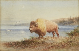 Artwork by Frederick Arthur Verner, Bison by the Water's Edge