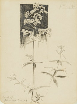 Artwork by James Edward Hervey MacDonald, Botanical Still Life