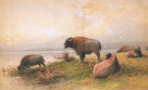 Artwork by Frederick Arthur Verner, Bison - Evening