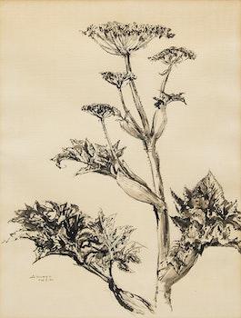Artwork by Arthur Lismer, Plant Study