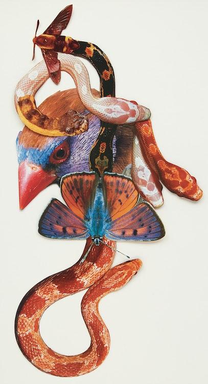 Artwork by Jennifer  Murphy,  Bird Snakes (2015)