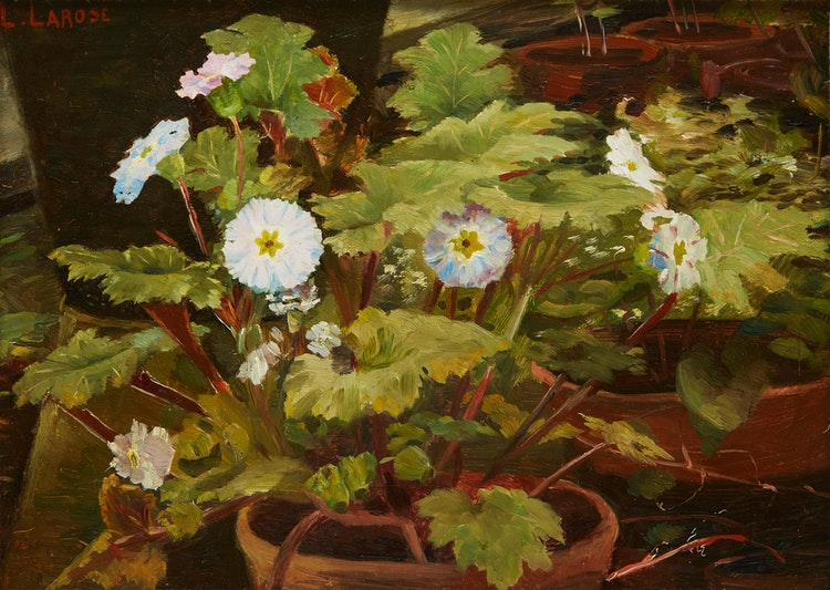 Artwork by Ludger Larose,  Primroses