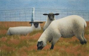 Artwork by David Alexander Colville, Three Sheep
