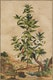 Thumbnail of Artwork by Abraham Munting,  Twelve Botanical Prints