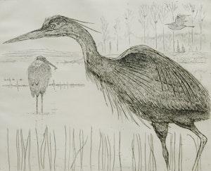 Artwork by Eric Nasmith, Great Blue Herons #2