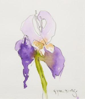 Artwork by Claude A. Simard, Iris