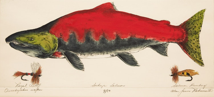 Artwork by Alan James Robinson,  Sockeye Salmon (Oncorhynchus Nerka)