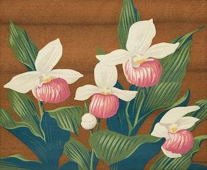 Artwork by Alfred Joseph Casson, Mocassin Flower