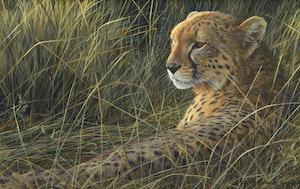 Artwork by Robert Bateman, Cheetah on the Mara