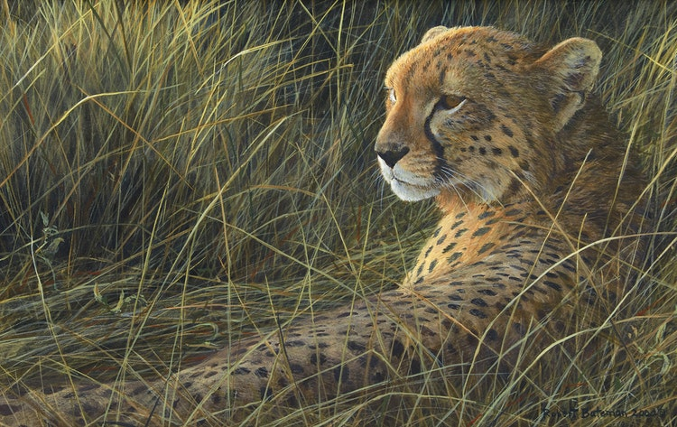 Artwork by Robert Bateman,  Cheetah on the Mara