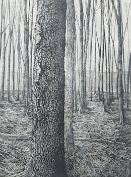 Artwork by Jo Manning, Woodlot III