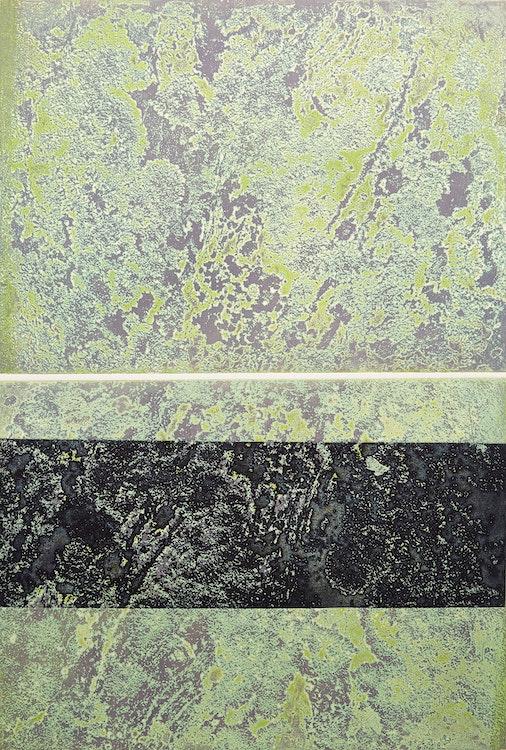 Artwork by Edward John Bartram,  Lichen Canadian Shield