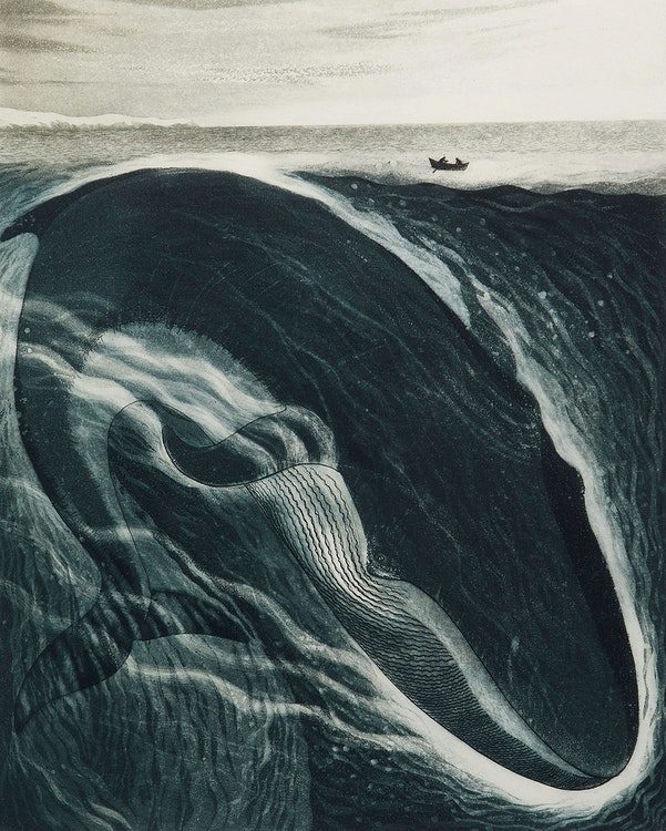 Artwork by David Lloyd Blackwood,  The Burgeo Whale: A Whale for the Killing