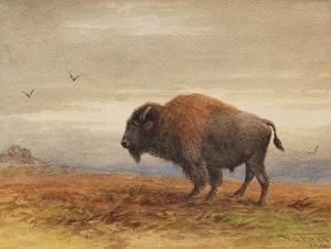 Artwork by Frederick Arthur Verner, Buffalo