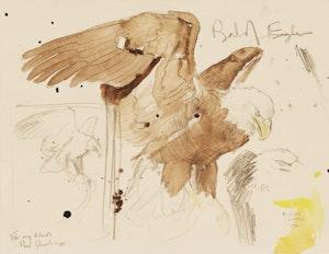 Artwork by Martin Glen Loates, Bald Eagle (Study)