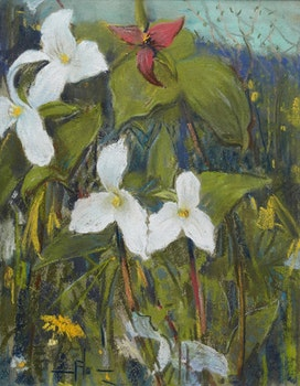 Artwork by Peleg Franklin Brownell, Trilliums