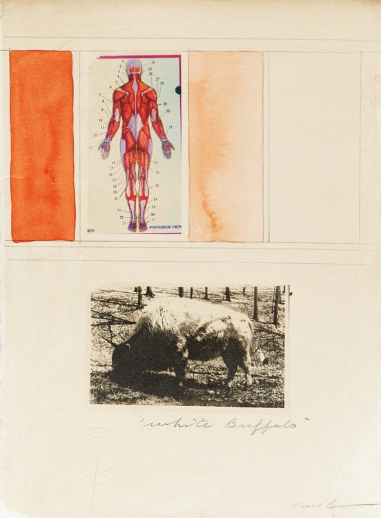 Artwork by Carl Beam,  White Buffalo