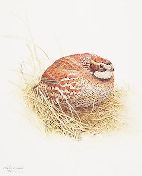 Artwork by James Fenwick Lansdowne, Three Bird Studies