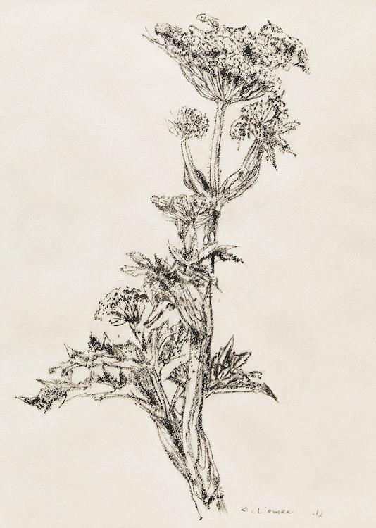 Artwork by Arthur Lismer,  Botanical Study