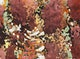 Thumbnail of Artwork by Roy Kiyooka,  Abstraction (Emma Lake)