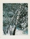 """Thumbnail of Artwork by Eliot Furness Porter,  Plates from the book """"In Wildness Is the Preservation of the World"""""""