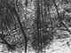 Thumbnail of Artwork by Gordon Appelbe Smith,  Balliol