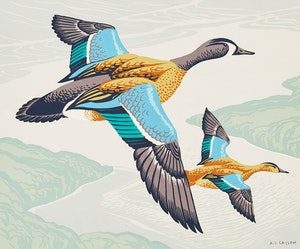 Artwork by Alfred Joseph Casson, Blue-Winged Teal