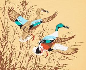 Artwork by Terence Michael  Shortt, Shoveler Ducks