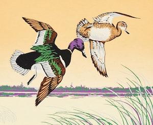 Artwork by Terence Michael  Shortt, Ring-Neck Ducks