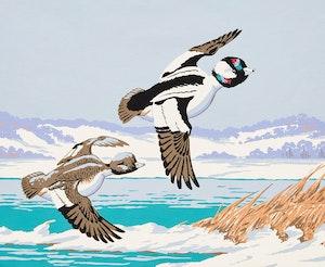 Artwork by Terence Michael  Shortt, Bufflehead Ducks