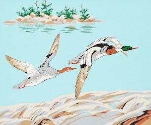 Artwork by Terence Michael  Shortt, Pin Tail Ducks