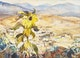 Thumbnail of Artwork by Frank Leonard Brooks,  View from Calle Are[_], San Mateo, Mexico