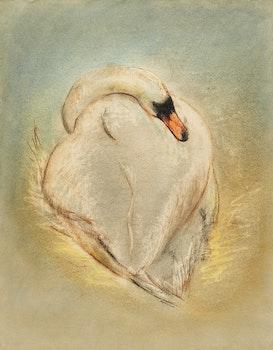 Artwork by Louis Muhlstock, Swan