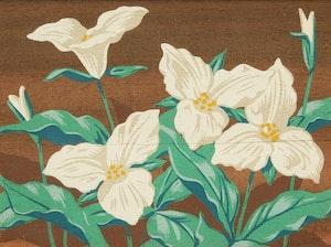 Artwork by Alfred Joseph Casson, Trillium; Wood Sorrel; Dogwood