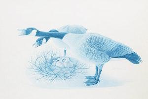 Artwork by James Richard Lumbers, Geese