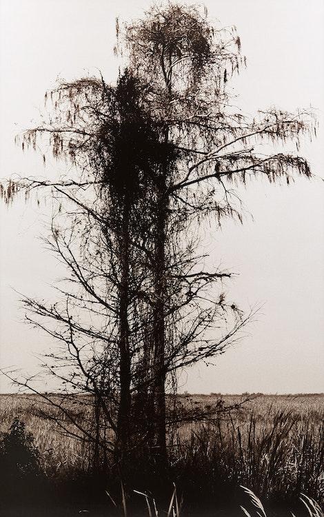 Artwork by Pierre Charrier,  Untitled #640