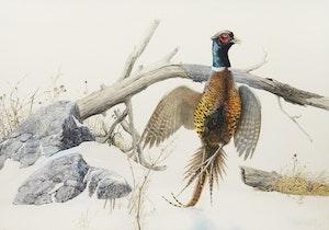 Artwork by Lissa Calvert, Pheasant Rising from the Snow