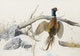 Thumbnail of Artwork by Lissa Calvert,  Pheasant Rising from the Snow